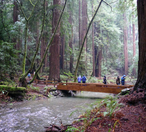 """In 1972, President Nixon signed into law """"An Act to Establish the Golden Gate National Recreation Area,"""" which now includes Muir Woods. Photo by Stephen Kennedy, Flickr Creative Commons"""