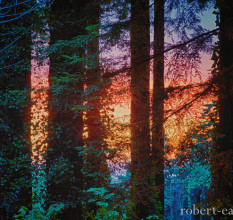 Robert Earle's 'Sunset Through The Redwoods', honorable mention in the 2013 Know Wonder Photo Contest.