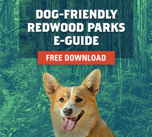 Free Dog-Friendly Redwood Parks Guide