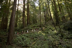 These kids will always remember their redwoods experience. Photo by Paolo Vescia.