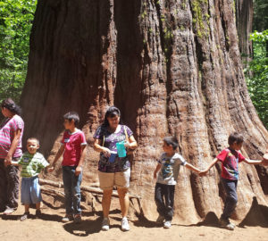 Visitors holding hands around a giant sequoia