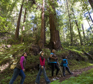 """Vote """"Yes"""" on Prop 68 to help preserve the peace and beauty of the redwood forests for future generations to come. Photo by Paolo Vescia"""