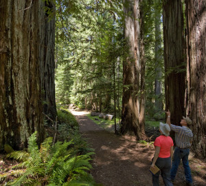 Funding from the Land and Water Conservation Fund would help us protect the pictured Mailliard Ranch and other redwood forests. Photo by Paolo Vescia
