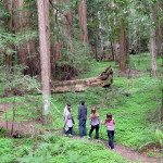 Since 1918, Save the Redwoods League has safeguarded special places, including the pictured Montgomery Woods State Natural Reserve.