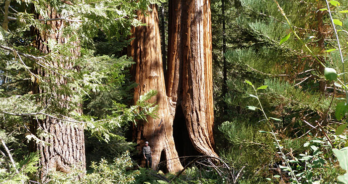 Featured in the January 2012 edition of <em>Redwood Matters</em>, our purchase of land helps protect the surrounding Giant Sequoia National Monument (pictured).