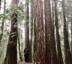 A woman stands in the middle of tall redwood trees