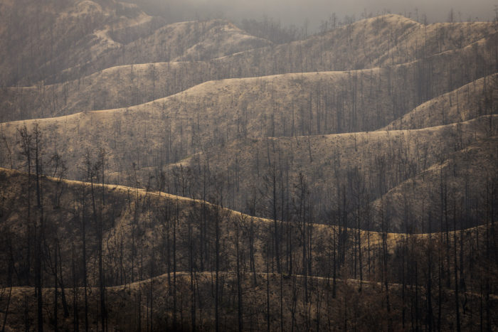 A burned forested mountain landscape