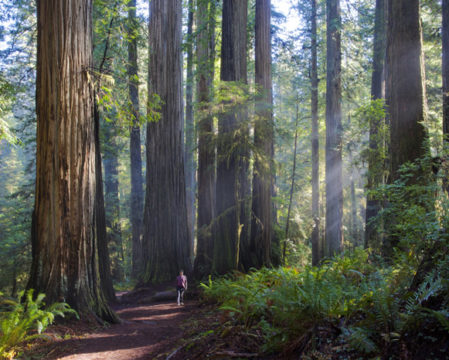Boy Scout Tree Trail, Redwood National and State Parks