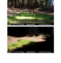 CV wildlife pics 9.2.15 (2)_Page_03
