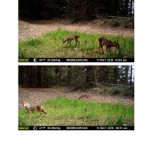 CV wildlife pics 9.2.15 (2)_Page_05