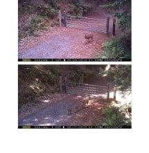 CV wildlife pics 9.2.15 (2)_Page_20