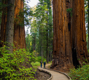 Experience Blooms at Calaveras Big Trees State Park