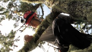 Cameron William examines the many lichen covering a branch in the 70m Douglas fir. Photo by Rikke Reese Næsborg.