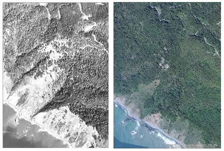 Left, Cape Vizcaino in 1947, with meadows clearly visible. Right, the present view, with trees encroaching heavily.