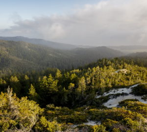 Cascade Creek is a stunning expanse of over 100 acres of old growth redwoods forest.