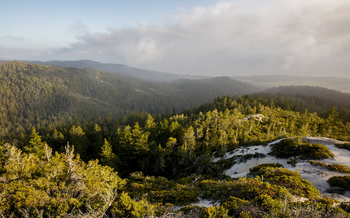 Cascade Creek is a stunning and ecologically rich habitat that consists of over 100 acres of old growth and second growth redwoods forest.