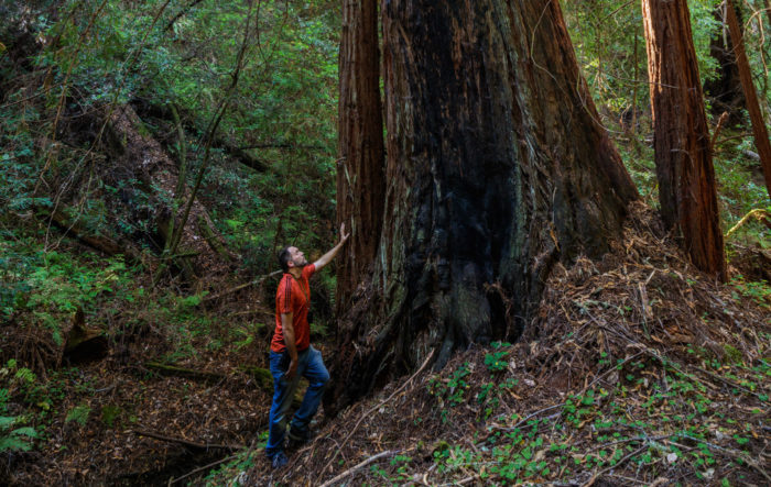 Man touching redwoods in drainage