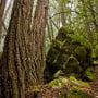 San Vicente Redwoods. Photo by Karl Kroeber