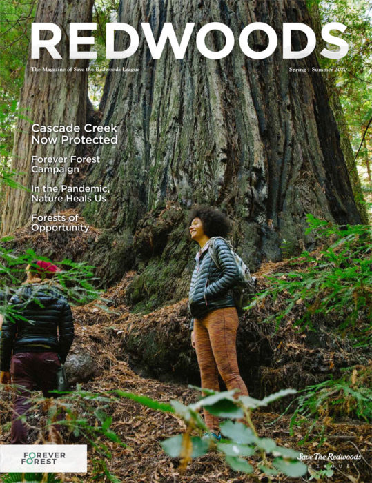 Redwoods Magazine