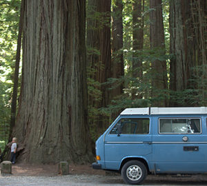 Donate your car to help save redwoods. Photo by Nicolas Boullosa, Flickr Creative Commons