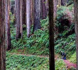 Prairie Creek Redwoods State Park.