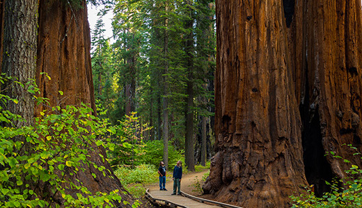 Calaveras Big Trees State Park. Photo by Max Forster
