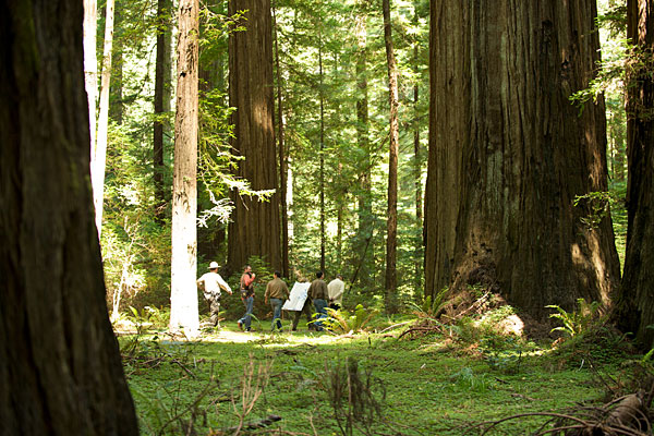 2010 tour of RCCI plot in Humboldt Redwoods State Park. Photo by Humboldt State University