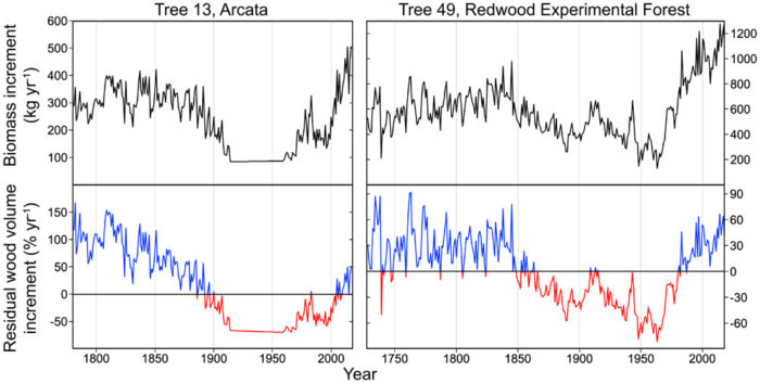 FIGURE 7: REDWOOD PRODUCTIVITY