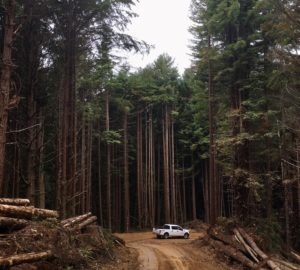 White pickup truck on a dirt road lined with trees and logs.