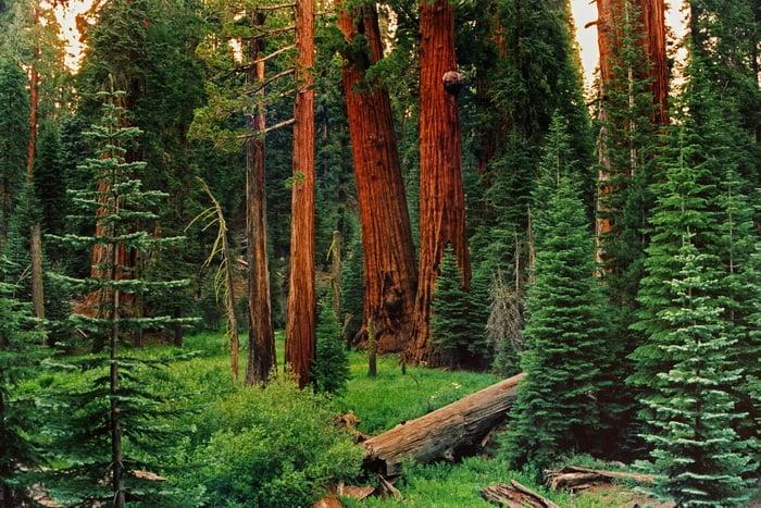 Redwoods Timeline | Save the Redwoods League