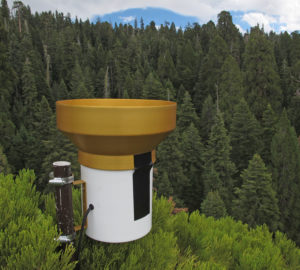 Treetop rain gauges enable accurate monitoring of precipitation input patterns at a Redwoods and Climate Change Initiative plot. Photo: Anthony Ambrose.