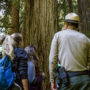 California State Parks Acting Sector Superintendent Brett Silver explains the importance of protecting the grove to a group of visitors. Photo by Max Forster