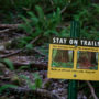 "Visitors are asked to walk on designated trails in order to prevent the damage caused by ""social"" trails. Photo by Max Forster"