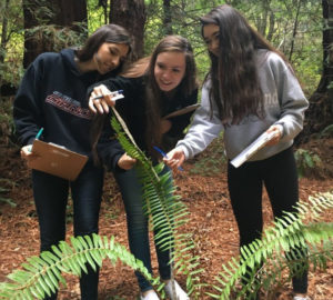 High school students get hands-on experience studying climate change in the redwood forest at Purisima Creek Redwoods Open Space Preserve.