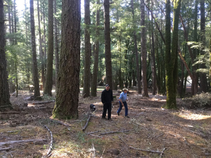 We're reducing the threat of severe wildfire by managing vegetation buildups in this Humboldt County forest.