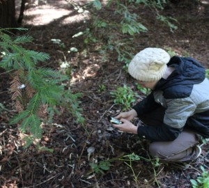 Marin high school students use their cell phones to participate in Redwood Watch, our citizen science program.