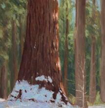 Oil painting from Calaveras Big Trees State Park by Brandon Schaefer, http://www.Brandon-Schaefer.com.