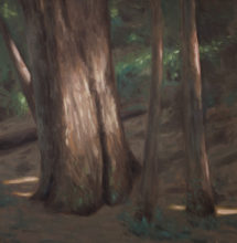 Oil painting from Roy's Redwoods Open Space Preserve by Brandon Schaefer, http://www.Brandon-Schaefer.com.