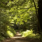 Enjoy summer's sun-dappled trails, like this one in Purisima Creek Redwoods Open Space Preserve. Photo by Julie Martin