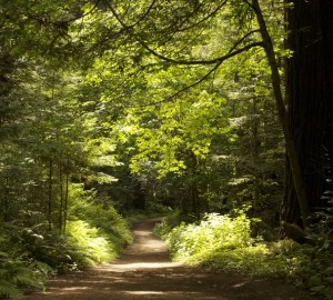 Enjoy summer's sun-dappled trails, like this one in Purisima Redwoods OSP. Photo by Julie Martin