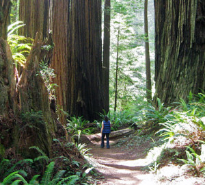 Save the Redwoods League partners with many organizations to keep the redwood forest accessible to the public.