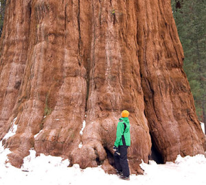 There's nothing quite like standing next to an enormous giant sequoia. Photo by Janne Huttunen