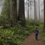 Redwood National Park. Photo by Michael Klaas, Flickr Creative Commons