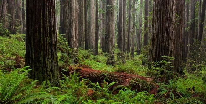 Jedediah Smith Redwoods State Park.