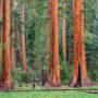 Giant Tree Trail; Sequoia National Forest. Photography by Jonathan Irish