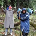 League volunteers planting redwood seedlings.
