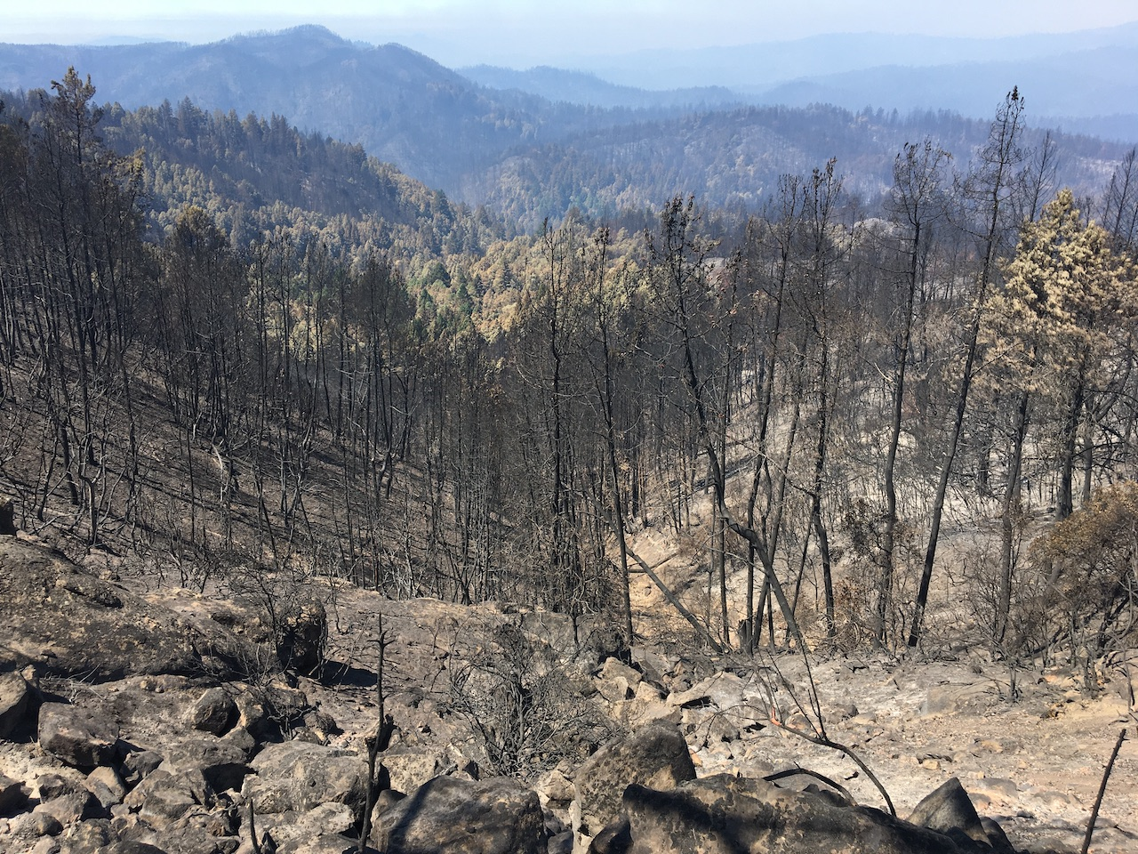 2020 wildfire aftermath at Big Basin Redwoods State Park