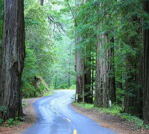 Mailliard Redwoods State Natural Reserve. Photo by David Baselt, RedwoodHikes.com