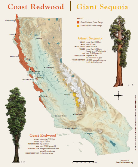 Education Poster: Coast Redwood and Giant Sequoia Map