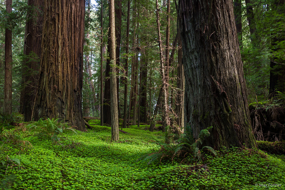 Save the Redwoods League has been awarded accreditation by the Land Trust Accreditation Commission